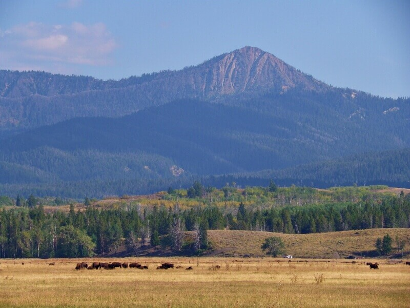 Bison-from-outer-road-Grand-Teton-National-Park