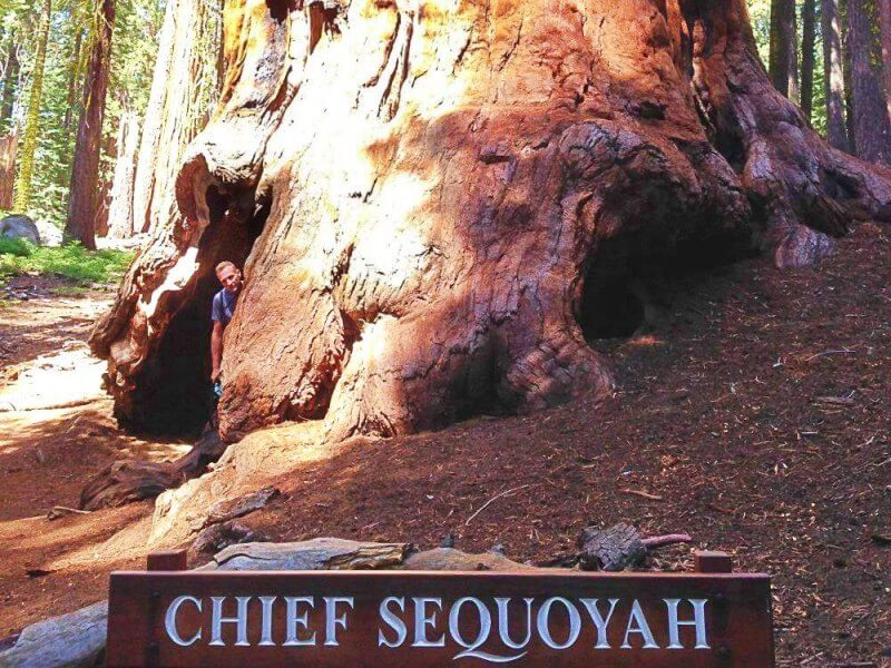 Chief-Sequoya-Tree-Sequoia-National-Park-Congress-Trail