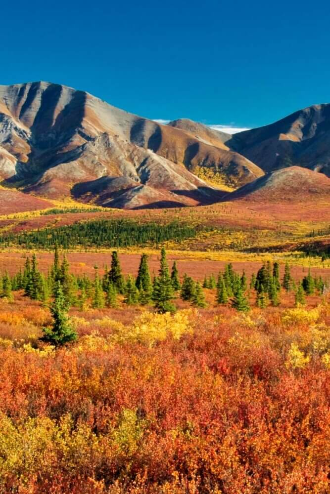 Denali National Park in the fall