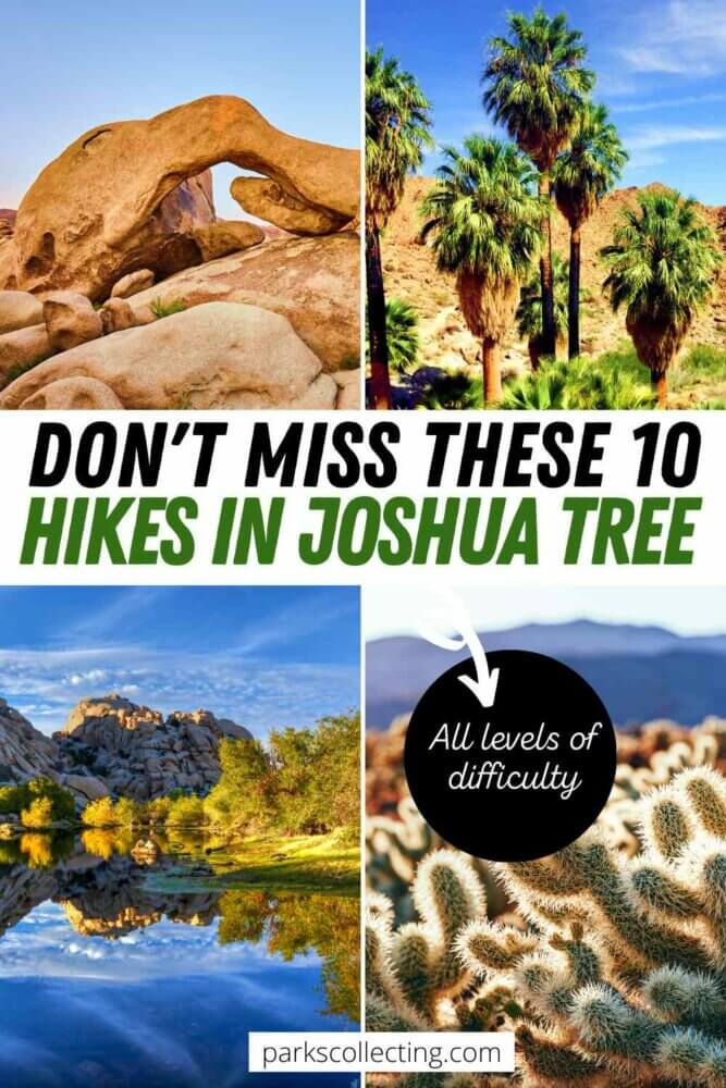 Dont Miss These 10 Hikes in Joshua Tree