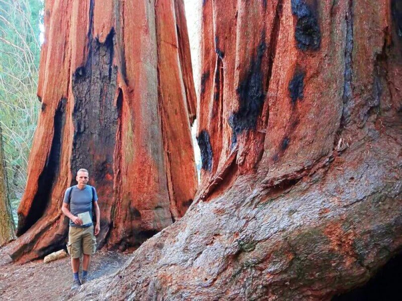 Giant-sequoias-and-me