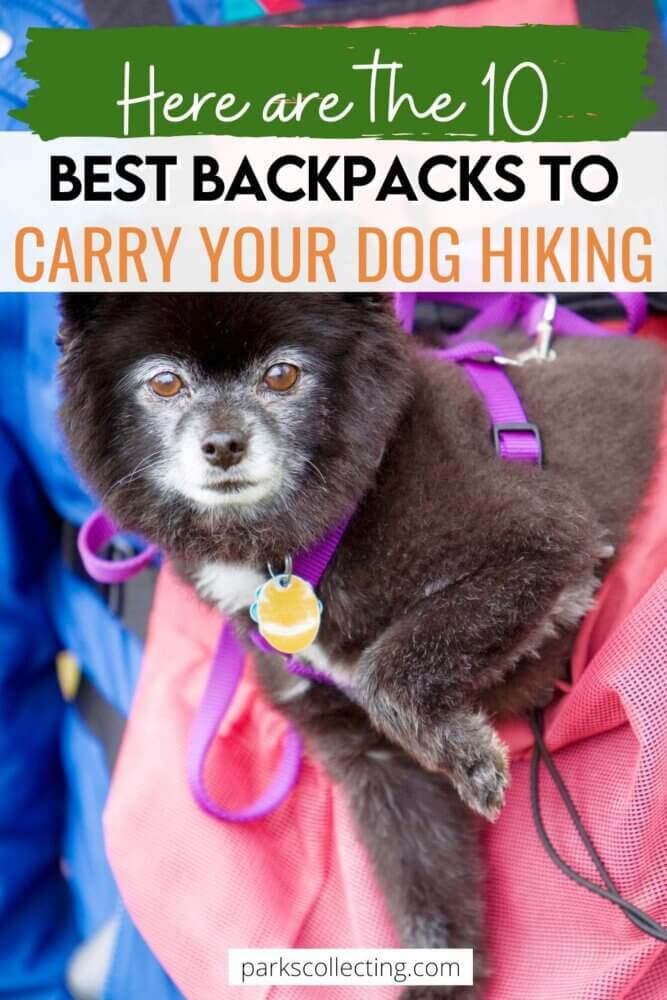 Best Backpacks to Carry Your Dog Hiking