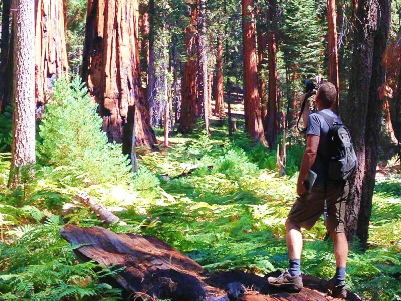 Hiking-Congress-Trail Sequoia National park