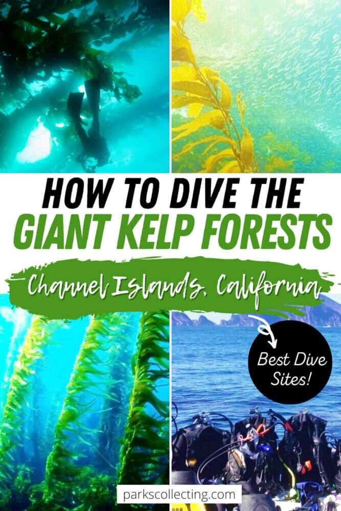 How to Dive the Giant Kelp Forests in the Channel Islands California
