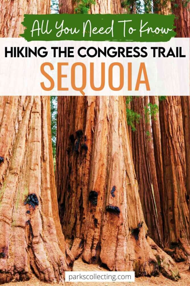 How to Hike the Congress Trail Sequoia National Park