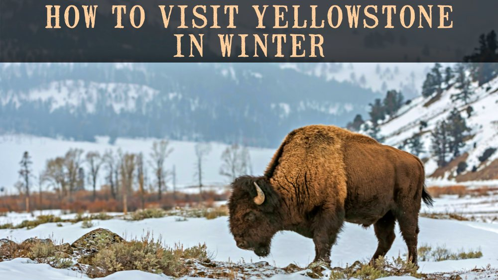 How to Visit Yellowstone in Winter