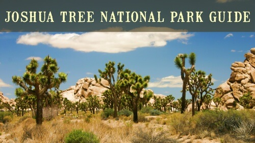 Joshua Tree National Park Guide