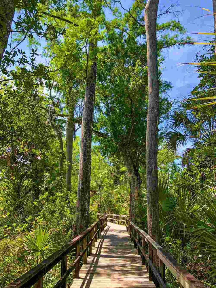 Pa-Hay-Okee Trail, Everglades National Park