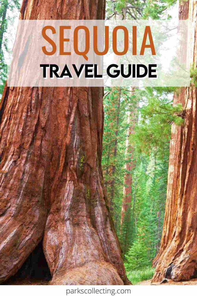Sequoia National Park Guide