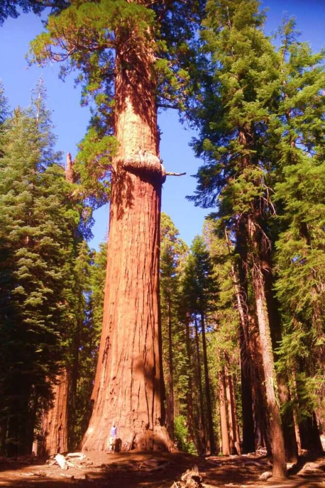 Sequoia National Park in summer