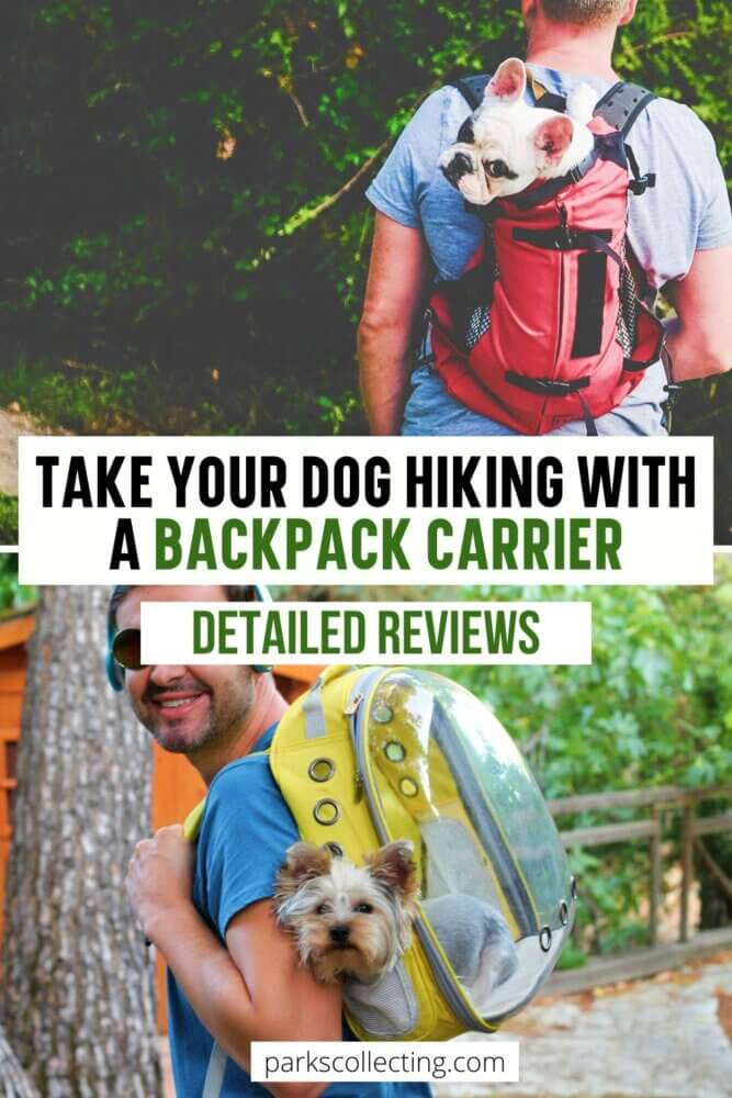 Take Your Dog Hiking with a Backpack Carrier