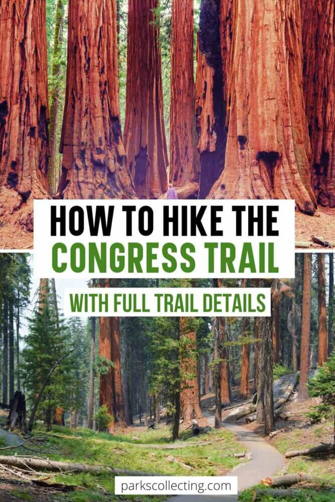 The Congress Trail Sequoia National Park