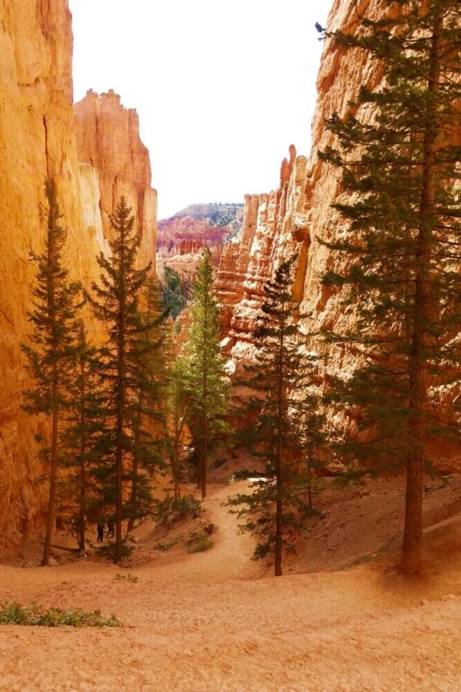 Wall Street section of Navajo Trail in Bryce canyon