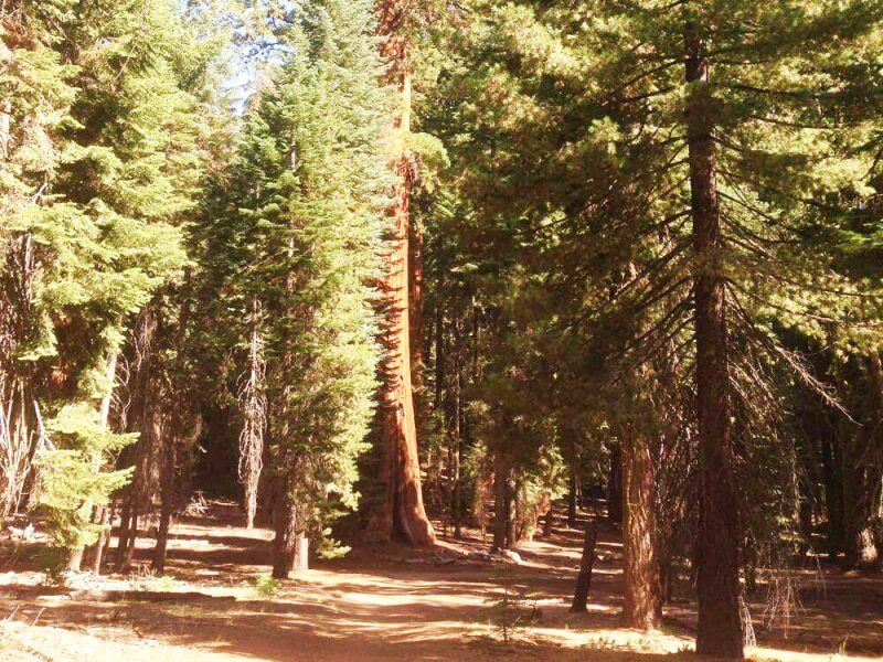 walk-back-on-congress-trail Sequoia National Park